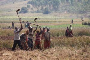 Karitas začenja s projektom za trajnostno preživetje 600 revnih družin v Z Ruandi