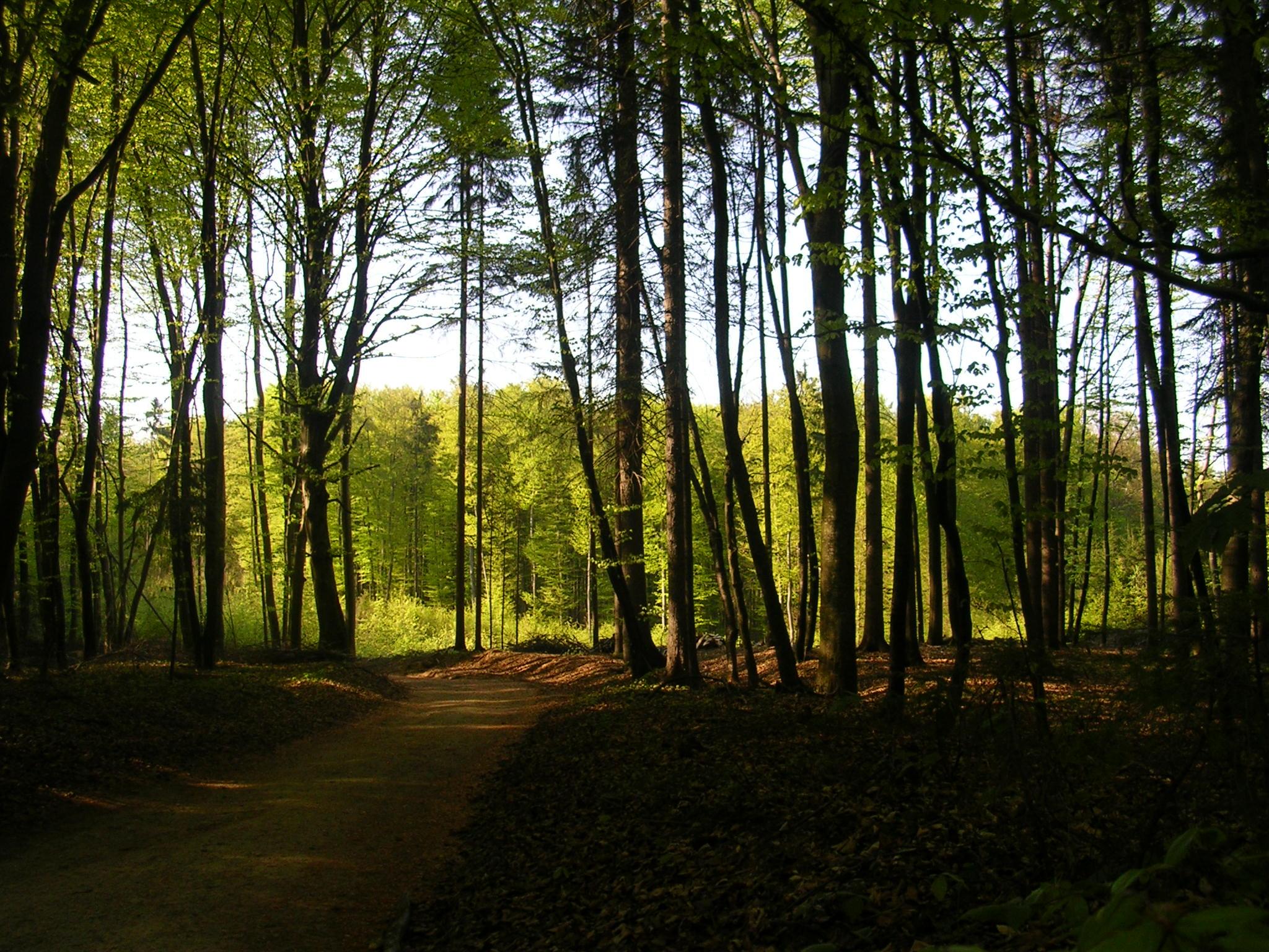 Gozdovi so ključnega pomena za reševanje izzivov današnjega časa