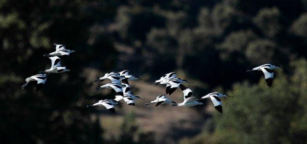 Svetovni dan ptic selivk 2020