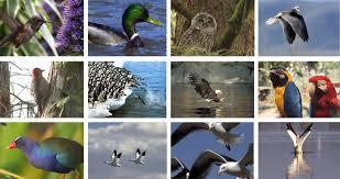 Populacije ptic v EU se zmanjšujejo