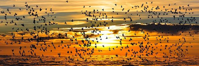 Ptice migrantke