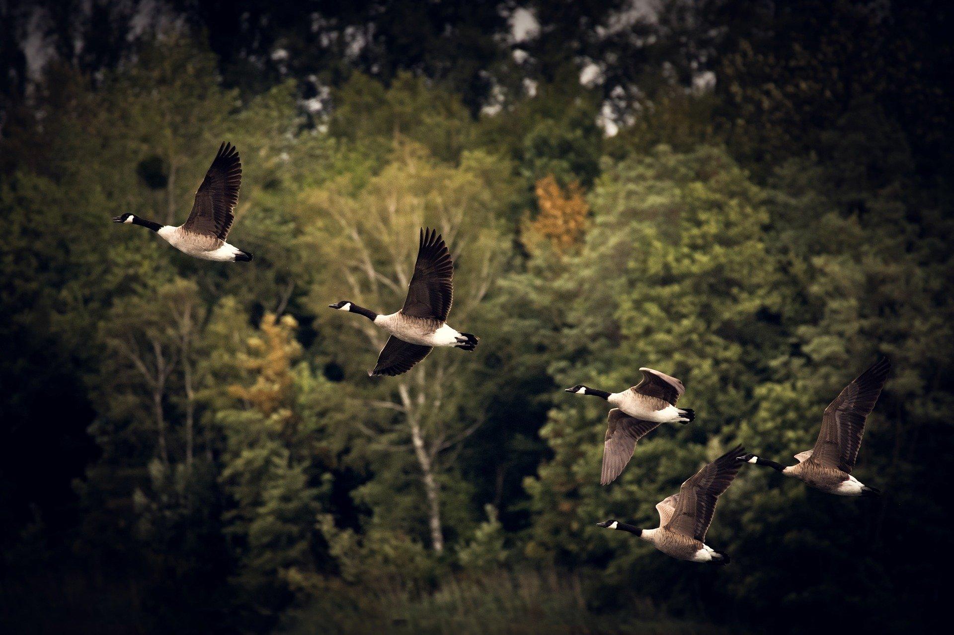 Ukrepi za zaščito ptic pred svincem