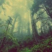 Gozd. Vir: Pixabay