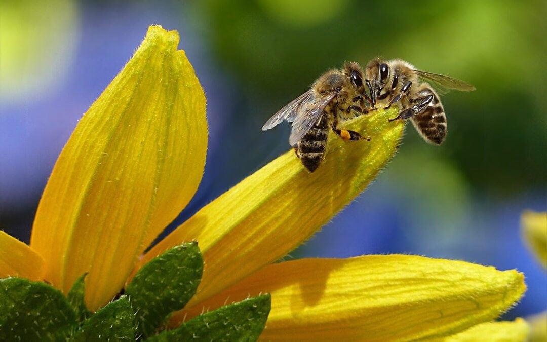 Na mednarodni dan biotske raznovrstnosti bodimo vsi del rešitve