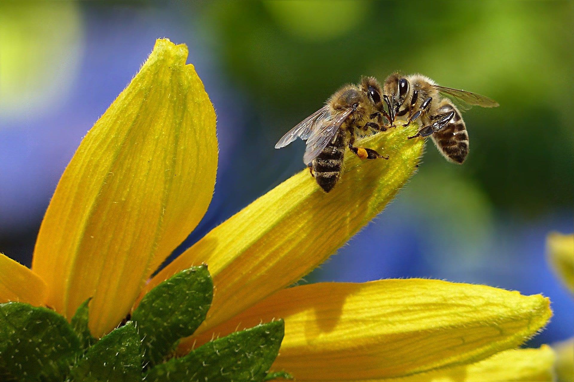 Čebela na cvetu.
