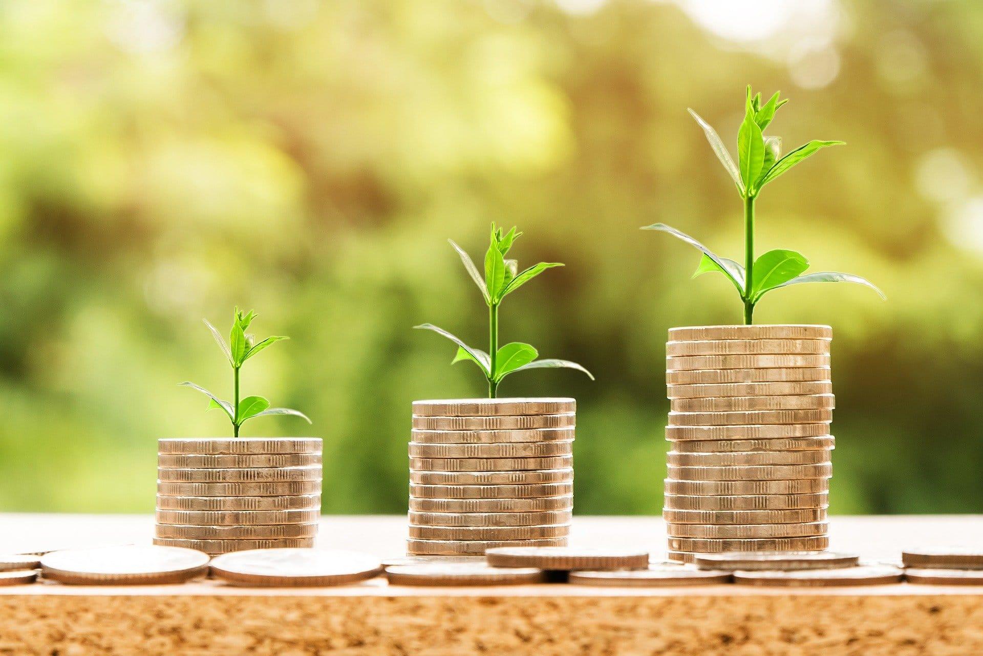 Kovanci, rastline, rast. Vir: Pixabay