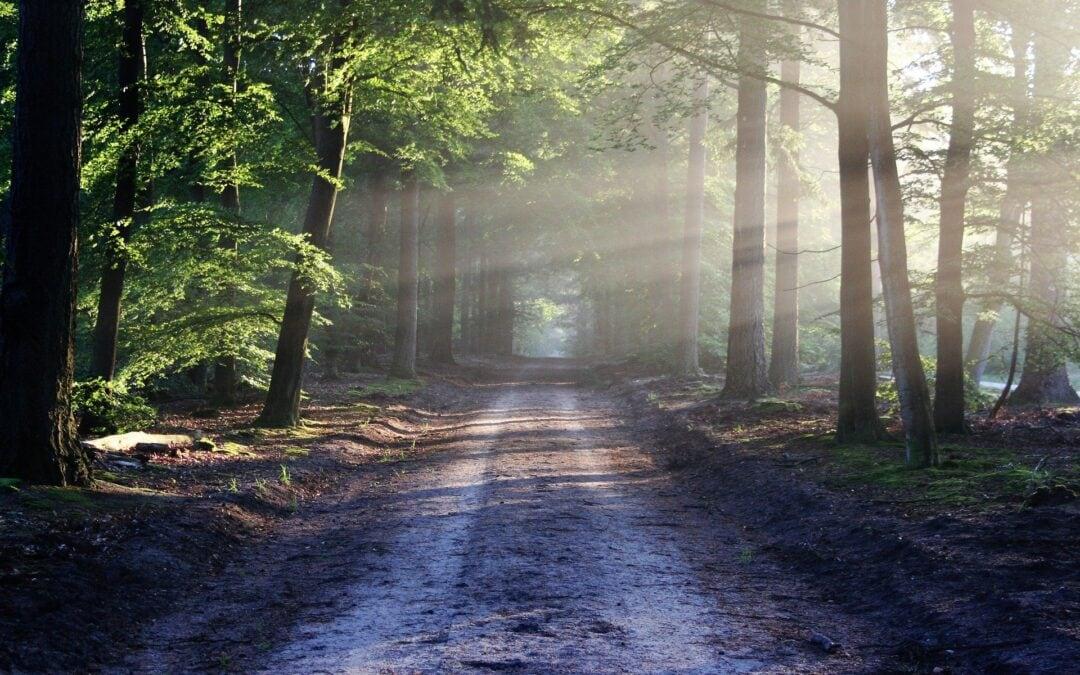 Danes je dan globalnega okoljskega dolga