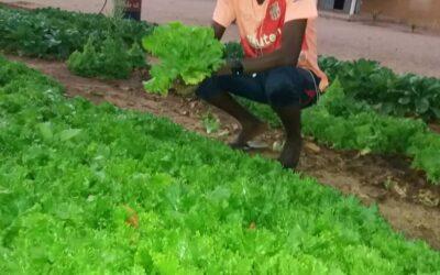 Vodnjak za novo upanje v Senegalu
