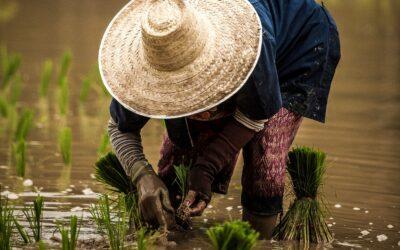 FAO: Covid ogrozil desetletja razvojnih prizadevanj